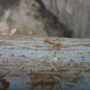 水長流 2012-09-22 AbhYVtBl
