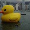 Rubber Duck AdqEjDDj