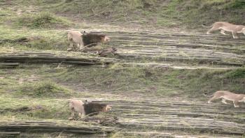 The Wildebeest Migration Natures Greatest Journey (2012) 3D.1080p.Bluray.HOU.X264 DL-zman