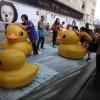 Rubber Duck Adxq4QpE