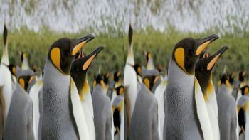 The Penguin King 3D (2012) 1080p.BluRay.Half-SBS.x264-Public3D