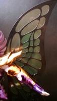 [Comentários] Myu de Papillón  - Página 10 AcoJU3TO