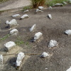 將軍石 2005 April 23 AccgGlHA